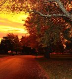 Ranku wschód słońca na ulicie Fotografia Royalty Free