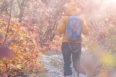 Ranku wycieczkowicza i mgły odprowadzenie na jesiennym Lasowym śladzie Zdjęcia Royalty Free