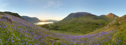 Rannerdale bluebells. Over Crummock Water with Mellbreak, Grasmoor and Whiteless Peak in view royalty free stock photography