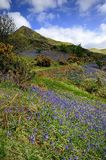 The Rannerdale Bluebells Stock Image
