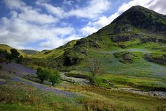 The Rannerdale Bluebells Stock Photo