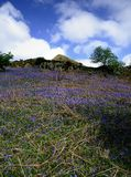The Rannerdale Bluebells Stock Photos