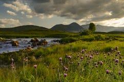 Rannoch hed Skottland royaltyfri bild