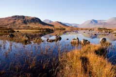 Rannoch moor. A horizontal image of the mountains on the Rannoch Moor in the Scottish Highlands reflecting on the water royalty free stock image