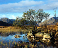 Rannoch Moor (scotland). Royalty Free Stock Photos