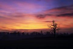 rano niebo Obrazy Stock
