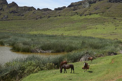 Rano Raraku, île de Pâques, Chili Image stock
