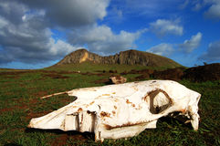 Rano Raraku Mountain - Easter Island. Horse skull on the mysterious island Royalty Free Stock Images