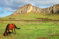 Rano Raraku Mountain - Easter Island. Horse grazing on grass on the mysterious island Royalty Free Stock Images