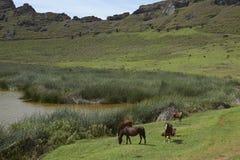 Rano Raraku, Pasen-Eiland, Chili Stock Afbeelding