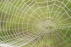 rano sieć pająka rosa Obraz Royalty Free