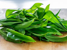 Ransom leaves fresh, ready to prepare Royalty Free Stock Photo