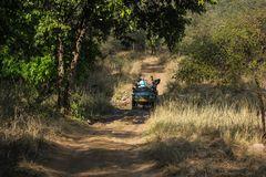 Ranthambhore, Rajasthan, India Februari-25-2019 professionele het wildfotografen en toeristen die beelden nemen royalty-vrije stock afbeeldingen