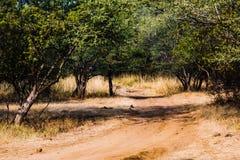 Ranthambore森林足迹  免版税库存图片