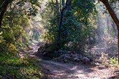 Ranthambore National Park, India. Driving through the jungle of Ranthambore National Park in Rajasthan, India stock image