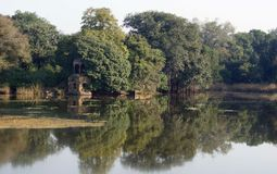 Ranthambore National Park royalty free stock photo