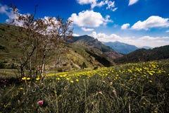 Ranuncoli e montagne Fotografia Stock Libera da Diritti