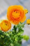 Ranunculus Fotografie Stock