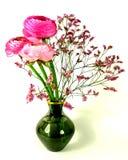 Ranunculus stock afbeelding