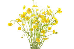 Ranunculus acris flowers Stock Photo