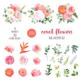 Ranunculus arancio, rosa rosa, ortensia, garofano di corallo, giardino illustrazione di stock