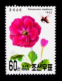 Ranunculus asiaticus, International Stamp exhibition Geneva 92 s. MOSCOW, RUSSIA - NOVEMBER 25, 2017: A stamp printed in Democratic People's republic of royalty free stock images