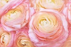 Ranunculus bloeiend bloemenboeket royalty-vrije stock afbeeldingen