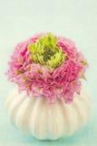 Ranunculus bloem Stock Foto