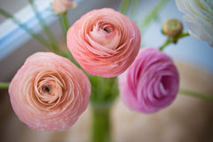 Ranunculus bouquet on craft paper Stock Images