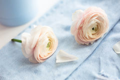 Ranunculus on bright jeans Stock Photos