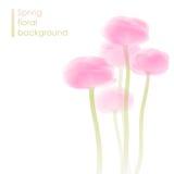 Wiosna kwiatu tło Obrazy Stock