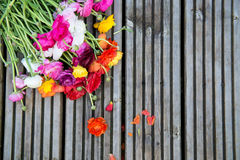 Ranunculus che mette su fondo di legno Fotografia Stock Libera da Diritti