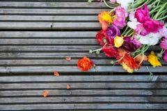 Ranunculus che mette su fondo di legno Fotografia Stock
