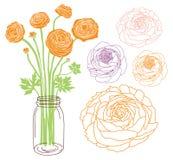 Ranunculus in een kruik royalty-vrije illustratie
