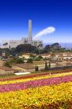 Ranunculus en Elektrische centrale stock afbeeldingen