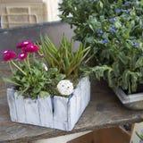 Ranunculus et marguerites à vendre dans le magasin Photo stock