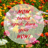 Ranunculus field - mother`s day concept Royalty Free Stock Images