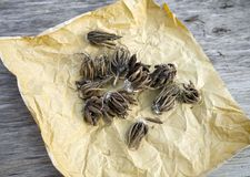Ranunculus flower bulbs tubers on paper ready for sowing stock image