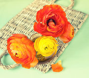 Ranunculus flower on vintage wicker tray Stock Photos