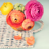 Ranunculus flower on a wicker tray Stock Images