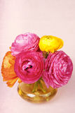 Ranunculus flower in a yellow vase Stock Photography