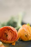 Ranunculus flowers Royalty Free Stock Photos