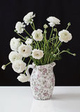 Ranunculus flowers Stock Photography