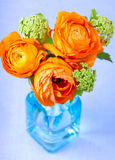 Ranunculus flowers in a blue glass vase Royalty Free Stock Photography