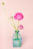 Ranunculus flowers in a vase Royalty Free Stock Images
