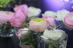 Ranunculus flowers in vases Stock Photography