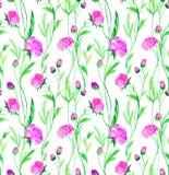 Ranunculus flowers in watercolor. Seamless pattern with gentle ranunculus flowers. Delicate floral design in watercolor Royalty Free Stock Photos