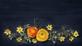 Ranunculus giallo su fondo nero fotografia stock