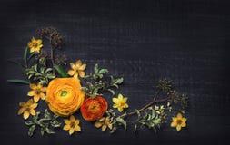 Ranunculus jaune sur le fond noir Images libres de droits