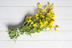 Ranunculus Royalty Free Stock Photo